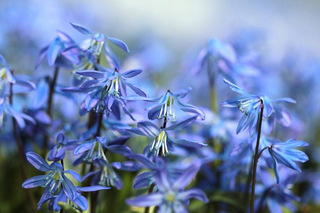 bloom-blurry-close-up-35050