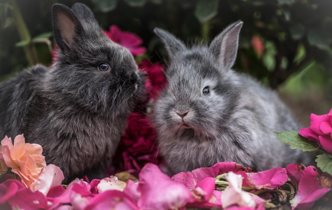 rabbit-2562684_1920